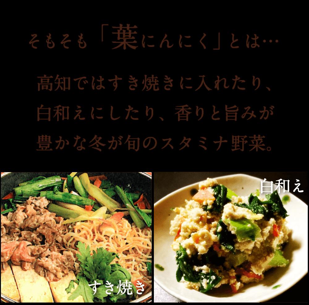 そもそも「葉にんにく」とは…高知ではすき焼きに入れたり、 白和えにしたり、香りと旨みが 豊かな冬が旬のスタミナ野菜。