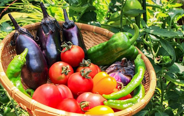 「発見!!高知野菜(葉ニンニク)が美味しいのは農家の腕では無かった!?」前編
