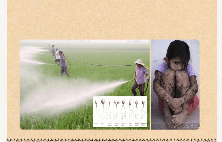 農薬・化学肥料が気になる方。癌(ガン)や細菌・ウィルス性疾患を気にする方。
