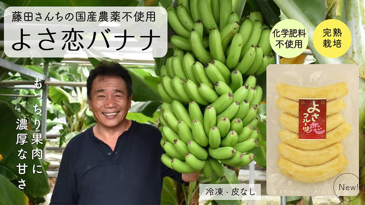 国産無農薬バナナ(よさこいバナナ)栽培期間中農薬化学肥料不使用