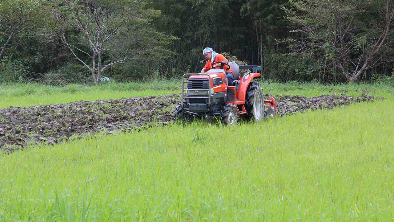 化学肥料不使用を自然堆肥の緑肥(エンバク)で実現_有機JAS認定オーガニック黒にんにく